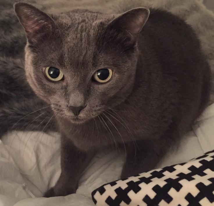 Honestyle-MelanieAnneFilipp-NationalPetDay-Cat-Penelope